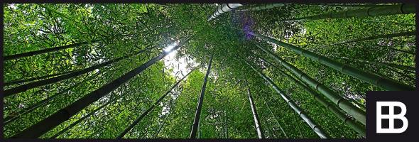 Bambusmöbel Bauportal Edle Bauelementede Baustoffe Bauforum
