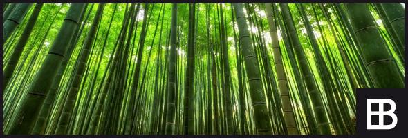 Gut gemocht Bambusparkett › Bauportal Edle-Bauelemente.de » Baustoffe Bauforum RL33