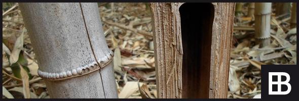 Gut bekannt Bambusparkett › Bauportal Edle-Bauelemente.de » Baustoffe Bauforum IV08