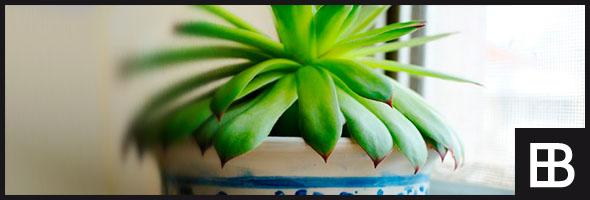 edle_bauelemente_blumentopfpflanze